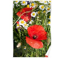 Poppies and Camomile Poster