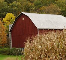 Barns by Penny Rinker