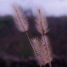 Plants by Penny Rinker