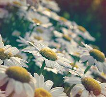 Peaceful Sunny Mornin Dew by senikai