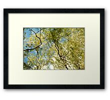 Windy Trees Framed Print