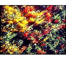 Pieces of Autumn #3 Photographic Print