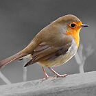 European Robin Red Breast with selective colour by SteveHphotos