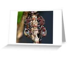 Ropalidia revolutionalis  Greeting Card