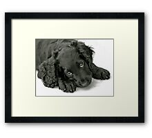 Very cute puppy Framed Print