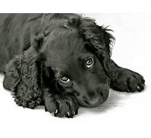 Very cute puppy Photographic Print