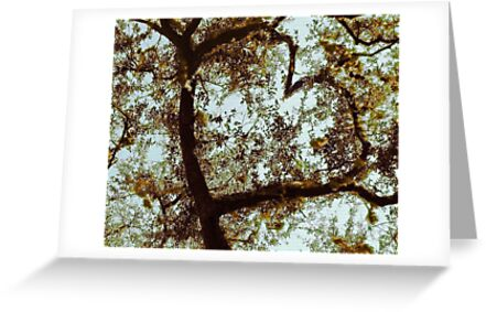 Tree Emotions by Roger Sampson