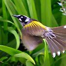 Bird Taking Off! by photoj