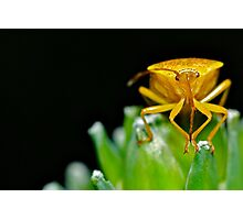 Bug's Antenna  Photographic Print