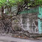Nature taking over on Montrose Avenue in Nassau, The Bahamas by 242Digital