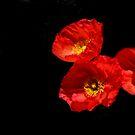 Poppies Peeking Out by Heather Friedman