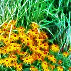 Kathie McCurdy Black Eyed Susans Abstract Flowers by Kathie McCurdy