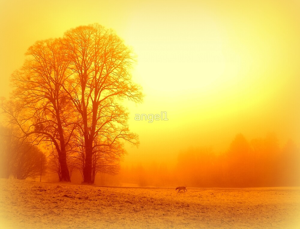 Yellow winter sunrise by ©The Creative  Minds