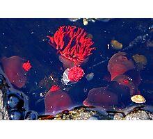 Sea Flowers Photographic Print