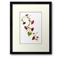 Kathie McCurdy Pressed Flowers Morning Glory Vine Framed Print