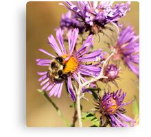 Bumble Bee Bumble Bee Canvas Print