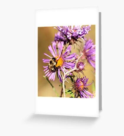 Bumble Bee Bumble Bee Greeting Card