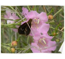 Purple Gerardia and Butterfly Poster