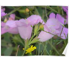 Hairy Purple Gerardia, Rare and Endangered Poster