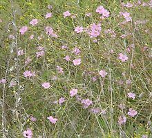 Spreading Purple Gerardia, Endangered Species by Navigator