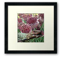 caiman lizard with flowers Framed Print