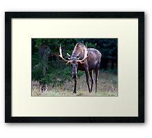 Don't Goose the Moose Framed Print