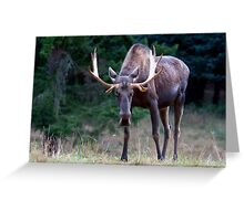 Don't Goose the Moose Greeting Card