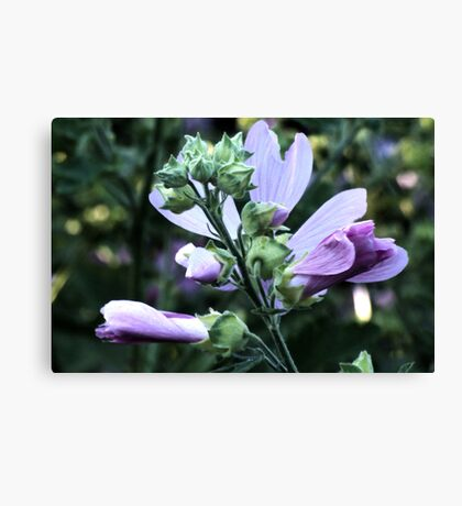 Wildflower series:  Wild Mallow No. 2 Canvas Print
