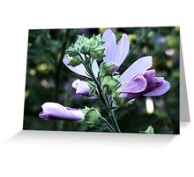 Wildflower series:  Wild Mallow No. 2 Greeting Card