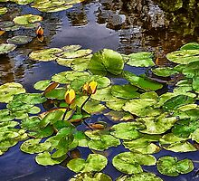 Thinking of Monet by bethakerman