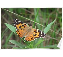 Autumn's Painted Lady Poster