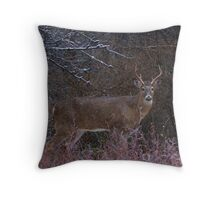 Snowy Buck - White-tailed deer Throw Pillow