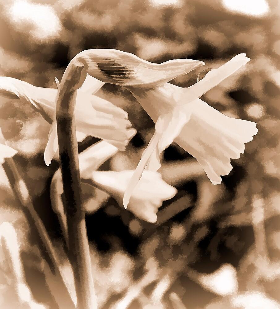 Vintage Daffodil  by fraser68