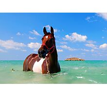 horse in the Mediterranean Sea Photographic Print
