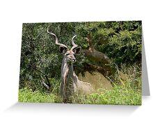 Greater Kudu Greeting Card