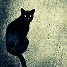 Black cat by marina63