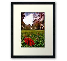 Red Leaf Under The Hot Autumn Sun  Framed Print