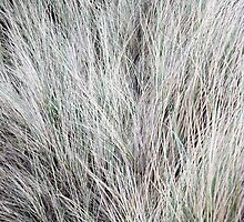 Dune Grass like Fur by moknophoto