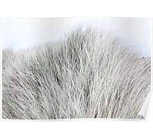 Dune Grass like Fur Poster