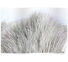 Dune Grass like Fur Poster