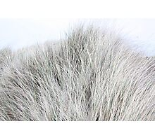 Dune Grass like Fur Photographic Print