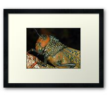 Giant grasshopper Framed Print