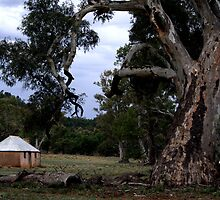 At the old Wilpena Homestead by bekyimage
