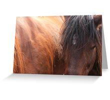 Horse Hair Greeting Card