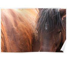 Horse Hair Poster