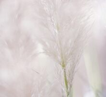 Airy Softness by JennyRainbow