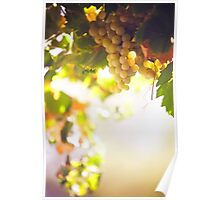 Harvest Time. Sunny Grapes VII Poster