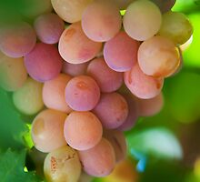 Harvest Time. Sunny Grapes VI by JennyRainbow