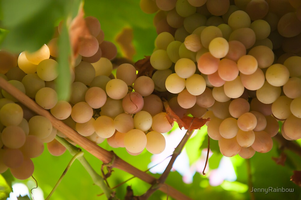 Harvest Time. Sunny Grapes V by JennyRainbow