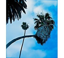 Palm Tree Intersection Photographic Print